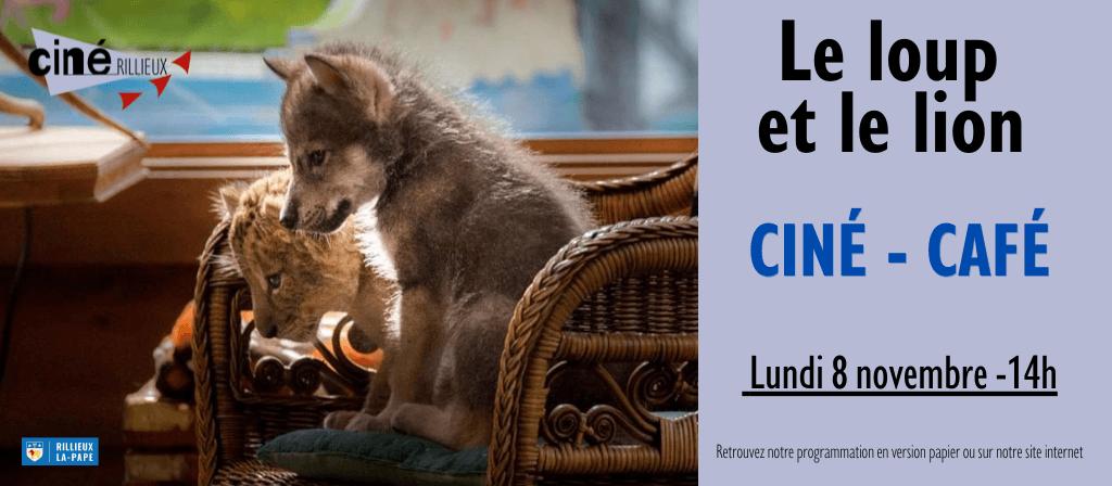 actualité cine cafe loup lion